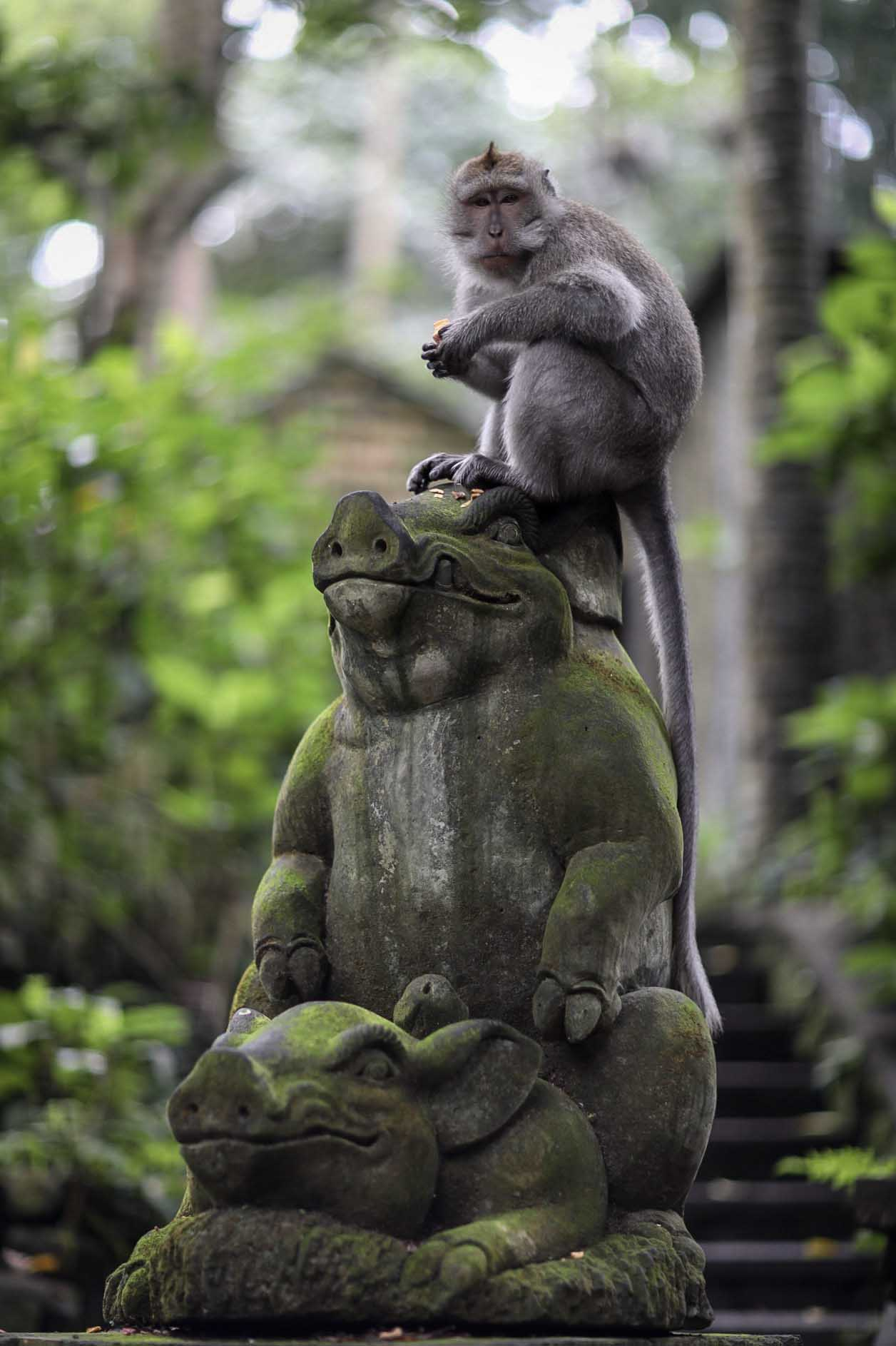 Monkey on a statue in Ubud Monkey Forest. Bali, Indonesia | Travel Photography