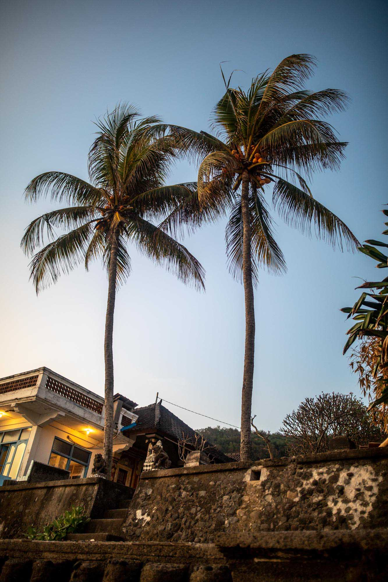 Two palm trees near beach in Candidasa, Bali, Indonesia