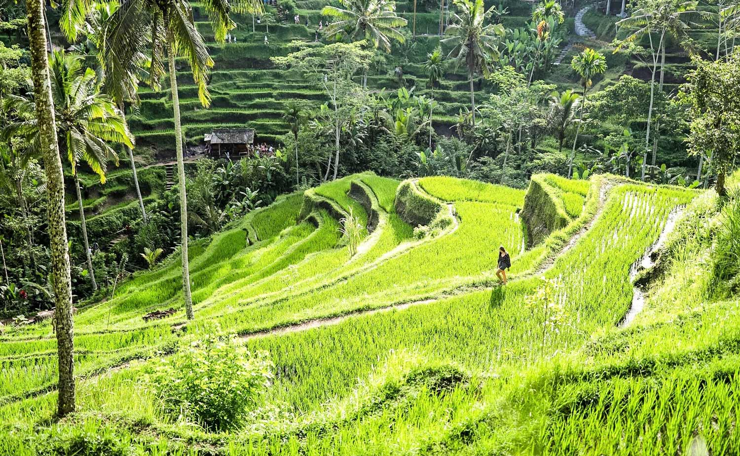 Woman walking through rice field in Bali, Indonesia | Tegalalang Rice Fields | Travel Photography